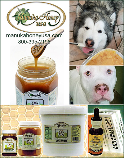 Manuka Honey USA for Dogs