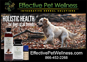 Effective Pet Wellness