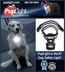 PupLight Safety Light for Dogs and Their Owners!